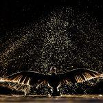 Oiseaux sauvages de pleine nature